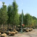 Summer Tree Inventory - New Jersey