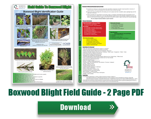 Boxwood Blight Field Guide PDF