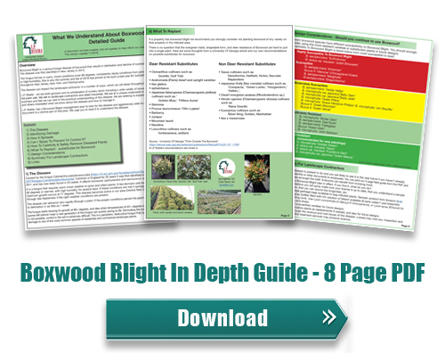 Boxwood Blight | LP Statile